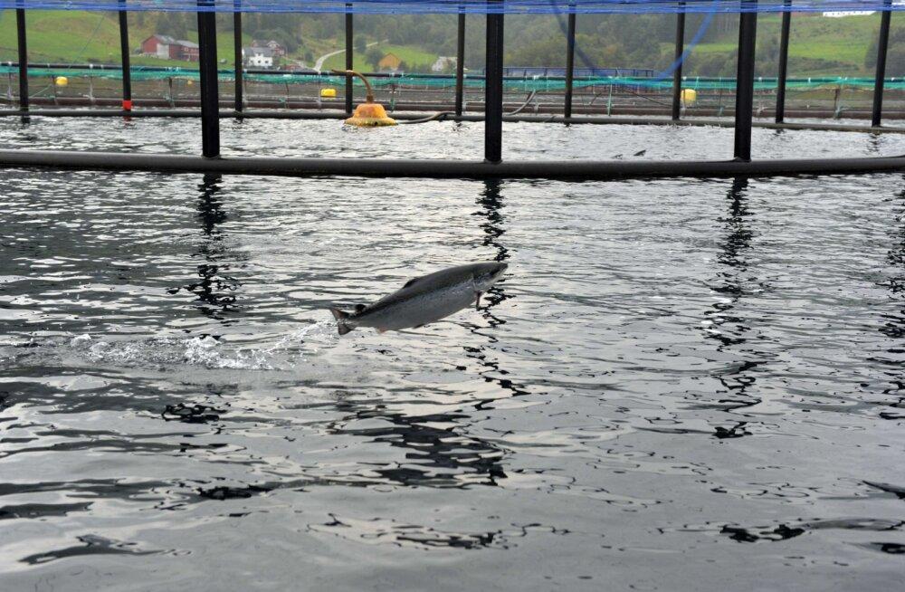 Norra parimat aktsiafondi vedasid üles kalapanused