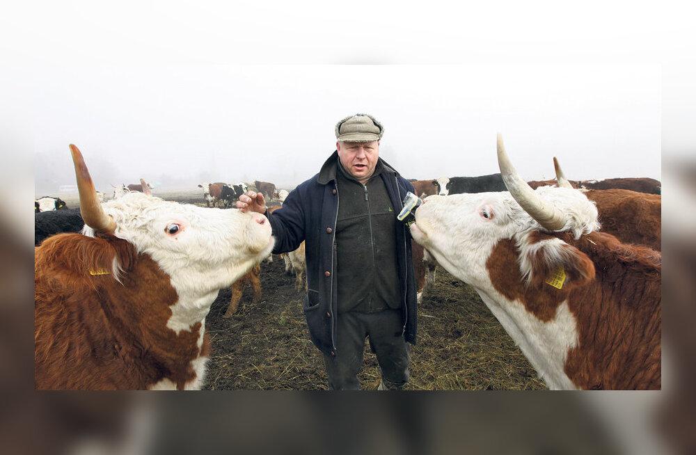 Karjakasvatajad jätavad osa maid saatuse hooleks