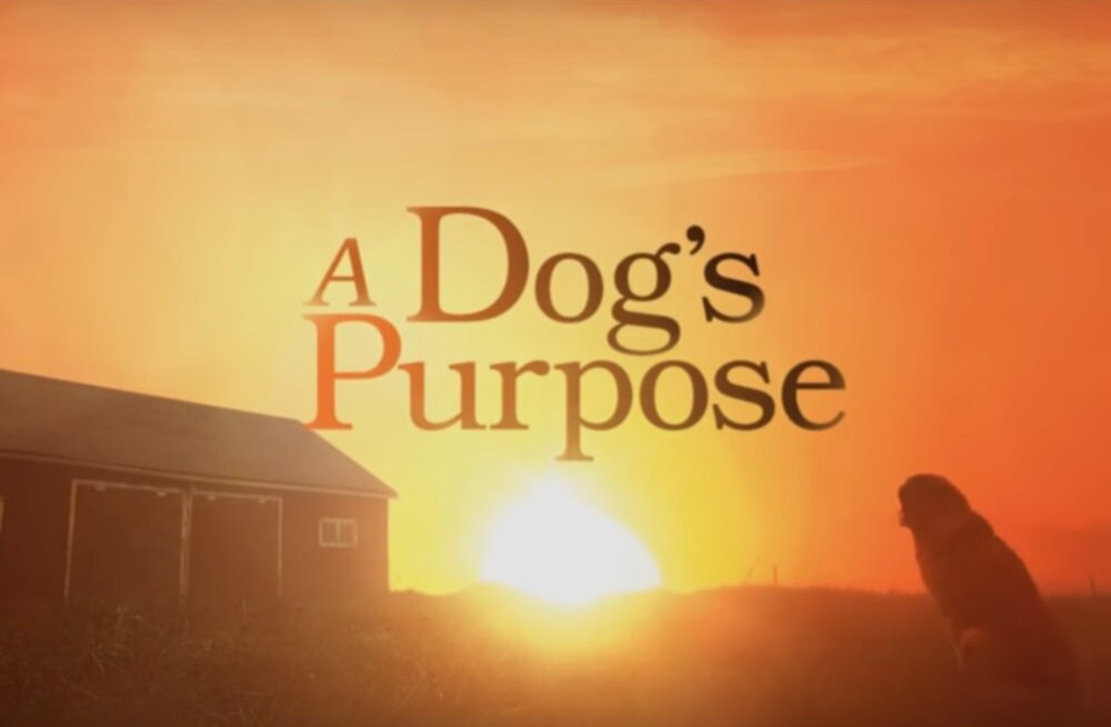 """Romaani """"Koera elu mõte"""" autor: avalikkuse ette lekkinud šokeeriv video annab vale pildi loomade ohutuse kohta võtteplatsil"""