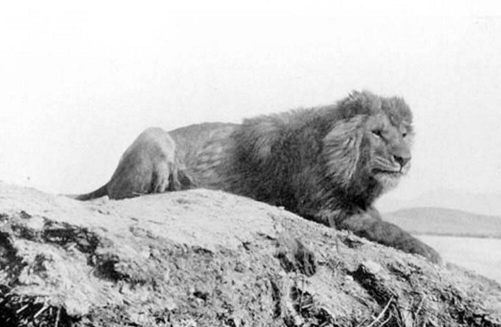 Pilguheit minevikku: 10 väljasurnud looma fotodel