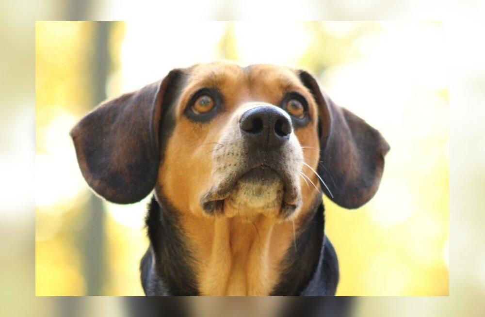 Bella lugu: hukkamisele viidud koerale appi tormanud päästjad leidsid eest üsnagi ebameeldiva üllatuse
