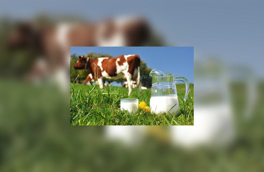 Kui anname inimesele lehmapiima, siis ta kasvab kiirelt suureks, tema lihased arenevad, kuid aju ja närvid ei jõua sellele arengule sama kiirelt järgi
