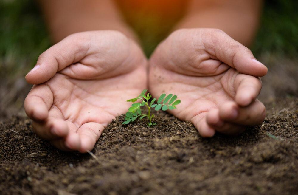 Cambridge kliimateadlase 7 soovitust kliimamuutustega võitlemiseks