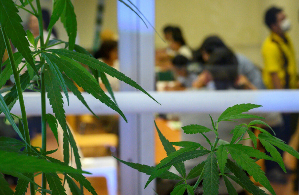 На Гавайских островах туристов больше не будут арестовывать за марихуану