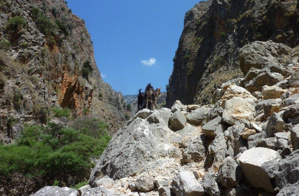 Tiiu ja Taso reisid, Kreeta