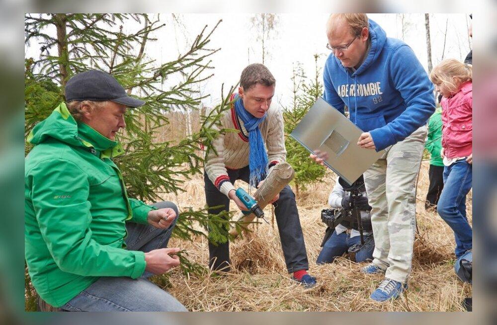 Varbolas metsaistutustalgud 2014