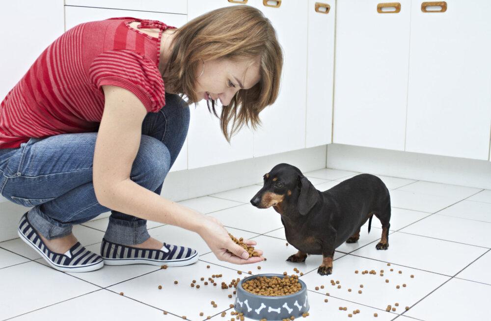 TASUB TEADA: kuidas koerale kuivtoitu valida