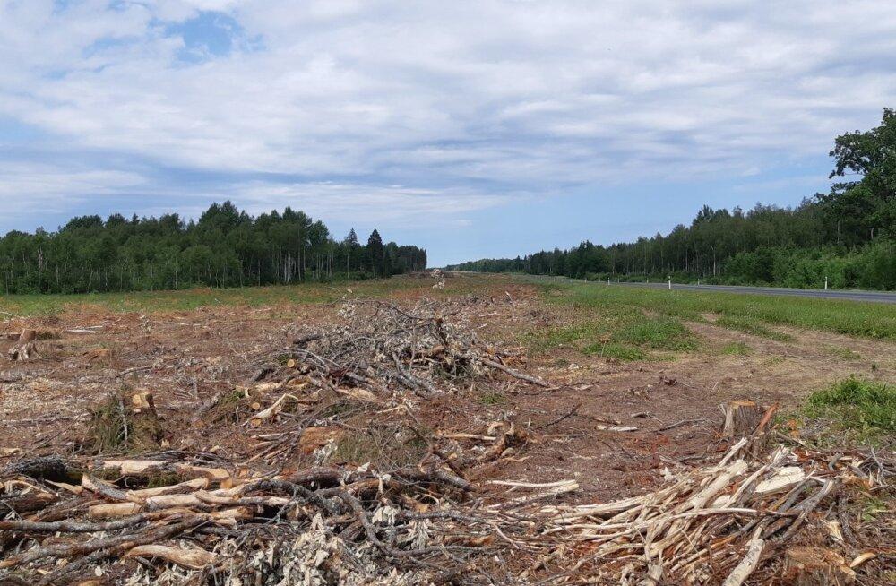 Tänavu on Risti-Virtsu maantee ääres uue kõrgepingeliini ehituse jaoks mitmel kilomeetril metsa maha võetud