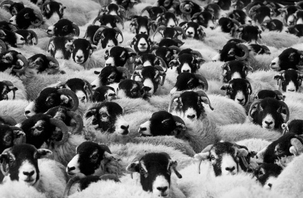 SÜNGED FAKTID | 10 kõige kummalisemat massisurma loomade hulgas