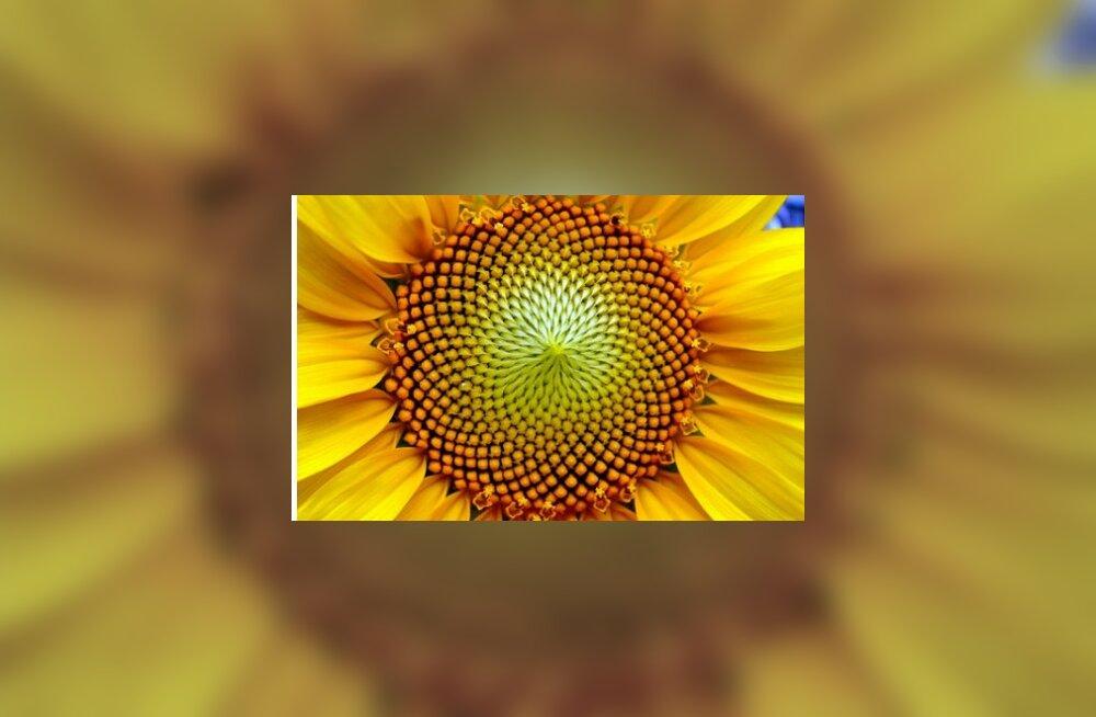 Fibonacci jada