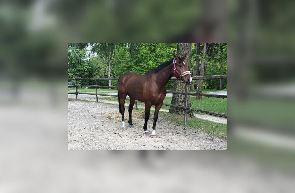 Kadunud hobune