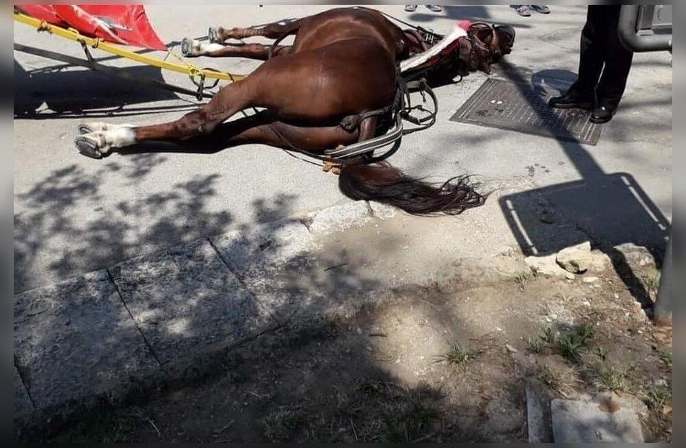 Tõeline orjatöö: turistide sõidutamine põrgukuumuses maksis hobusele elu