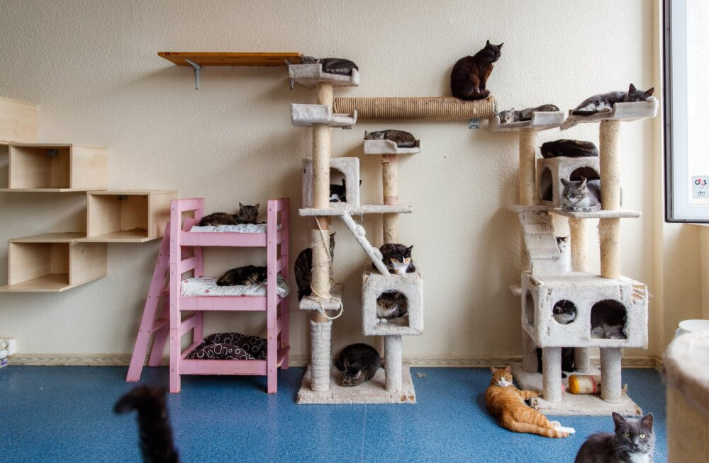 Hüljatud kassid