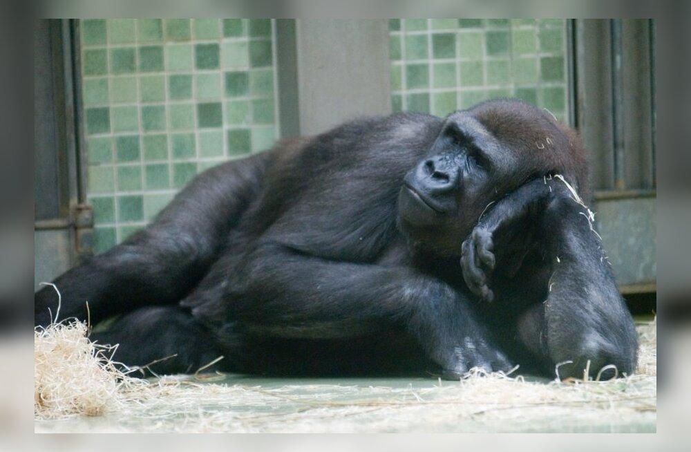 Berliini loomaaed/pilt on illustreeriv