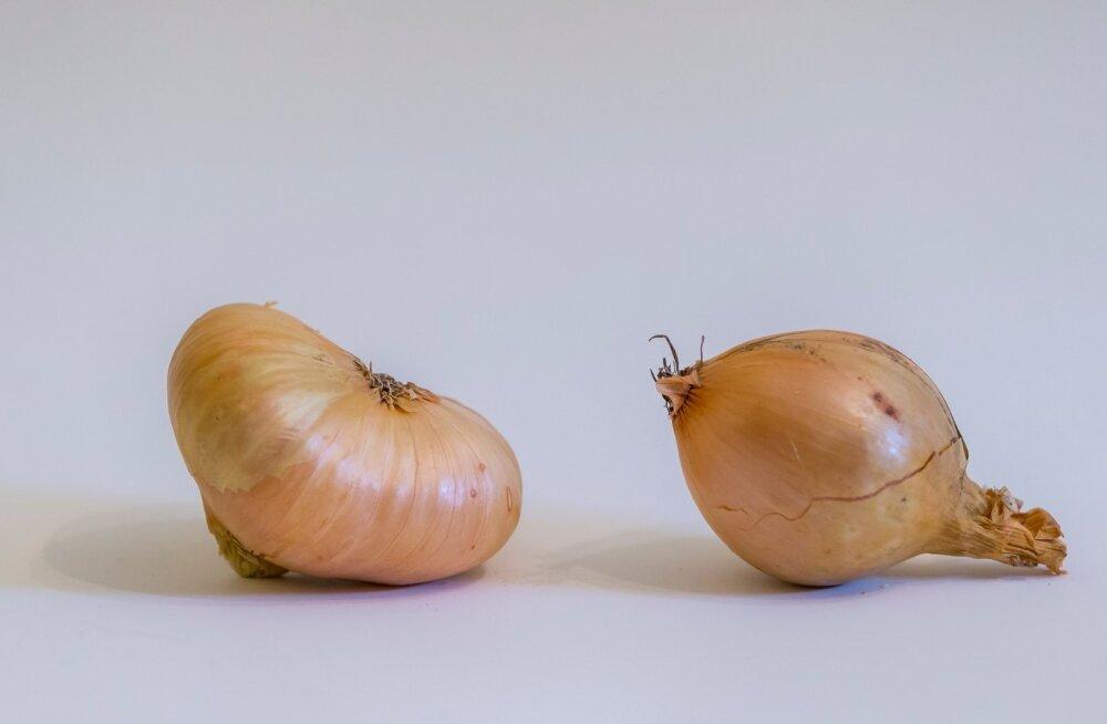 Peipsi ja Poola sibul