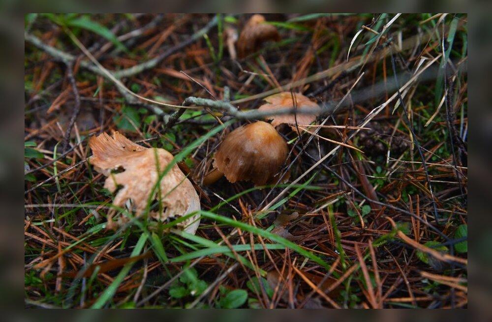 ФОТО: Новый год уже на носу - а в лесу до сих пор можно найти грибы и ягоды