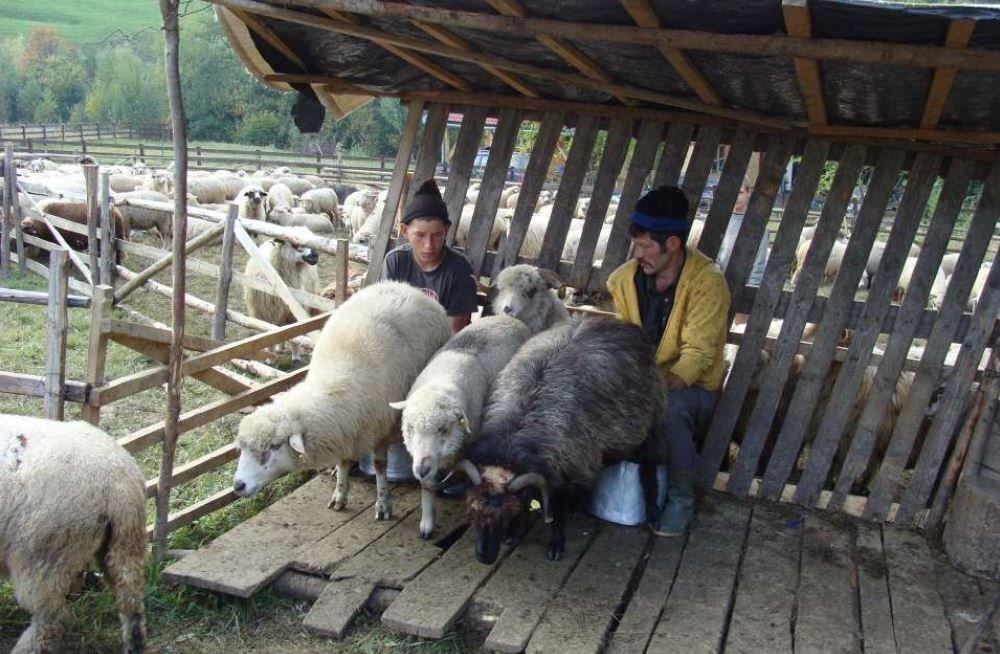 REISIKIRI MAALÄHEDASEST RUMEENIAST: 4,2 miljonit talu, lambad ja karjused
