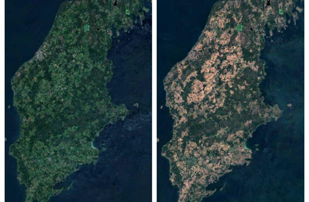 SATELLIIDIFOTO | Kuumus ja kuivus on tavapäraselt rohelise Gotlandi kõrbekollaseks kõrvetanud