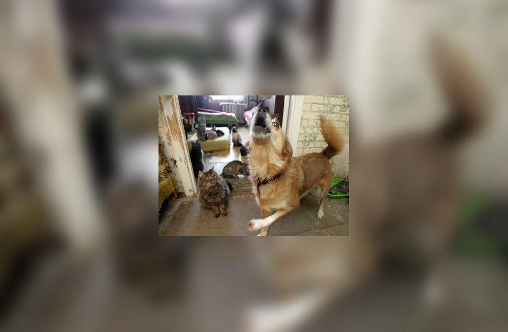 Koerte-kasside steriliseerimiseks vaja riigi abi