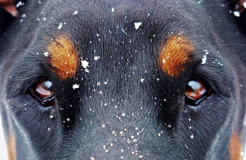 Eesti Loomakaitse Liit paneb inimestele südamele teatada hüljanud lemmikloomadest!