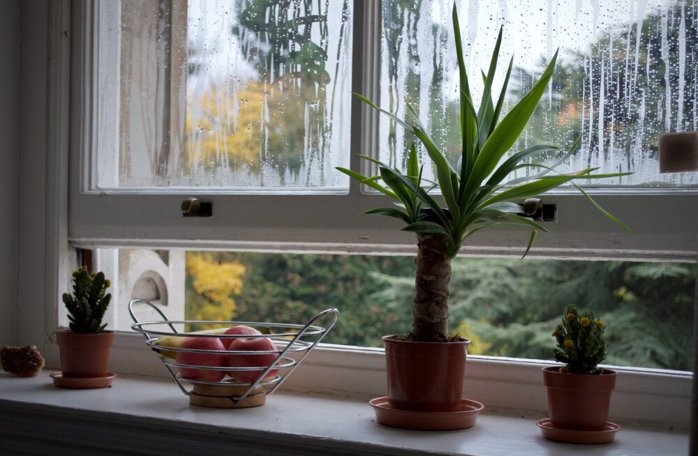 On üks väga lihtne põhjus, miks tasuks ka talvel kodus aknaid lahti hoida