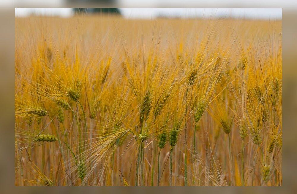 Trigon Agri ostab Venemaal 30 000 hektarit põllumaad