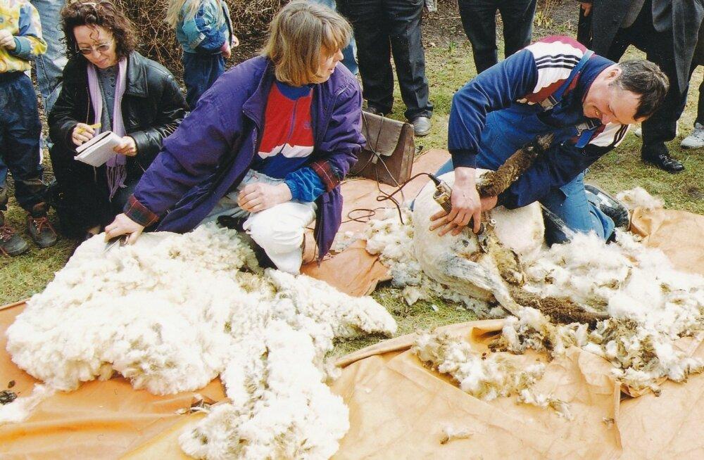 Lääne-Eestis ja saartel oli pärtlipäev ka lambaniitmise päev.