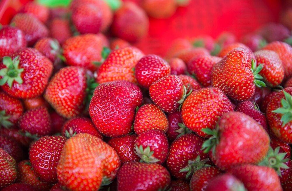 Maasikad hallitavad. Maasikamüüja Liilia Kilk