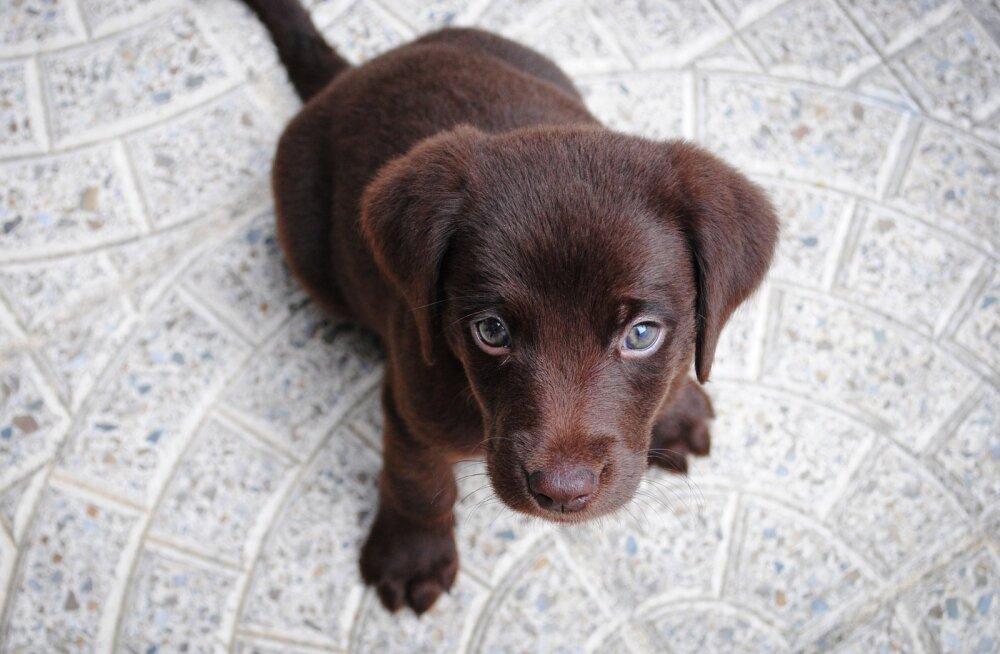 TOP 4 | Kõige armsamad videod pilkupüüdvatest koerakutsikatest