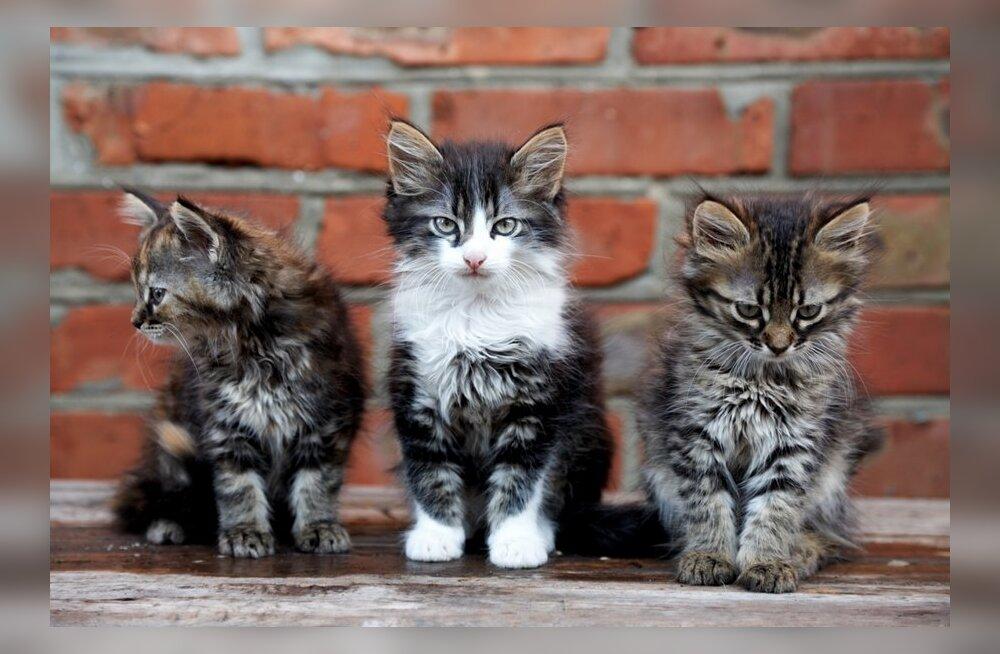 Общество защиты животных: мошенники в интернете могут собирать деньги якобы на лечение животных
