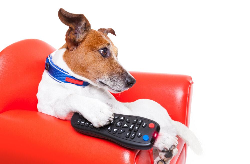 Saa teada: kas lemmikloomad näevad teleripilti samamoodi nagu inimesed?
