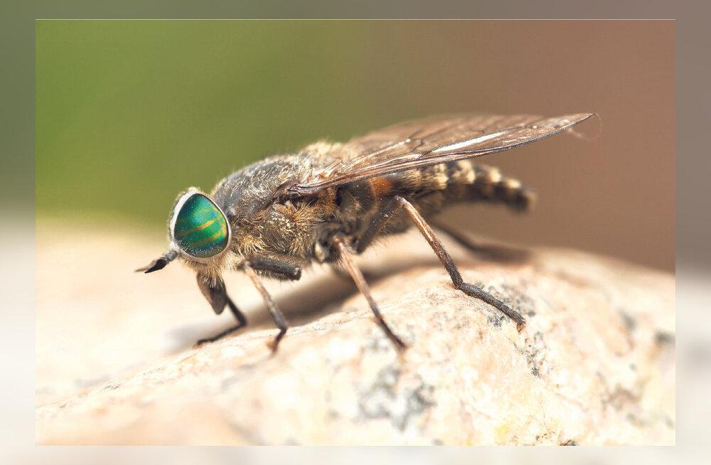 Esmaabi putukahammustuste korral