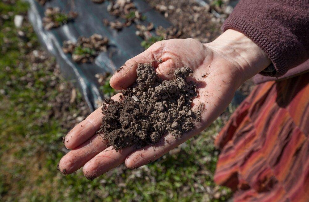 95% inimkonna toitmisest sõltub mullast.