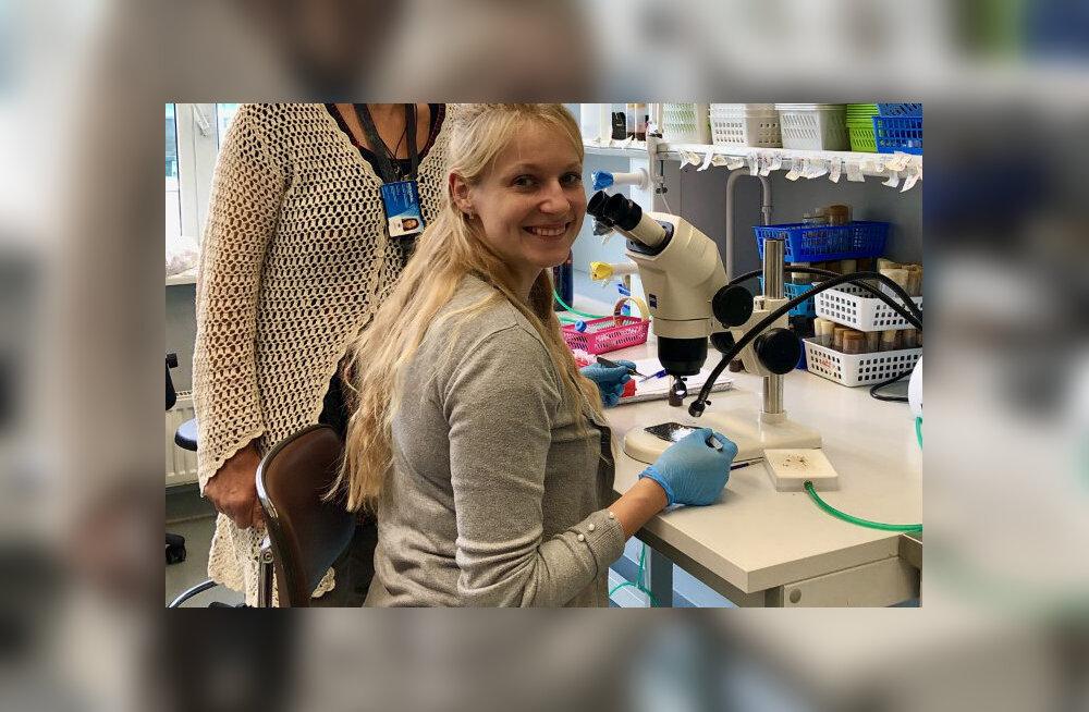 Tehnikaülikooli teadlased leidsid tüütule äädikakärbsele mõtte – teda saab kasutada ohtliku ajuhaiguse uurimiseks