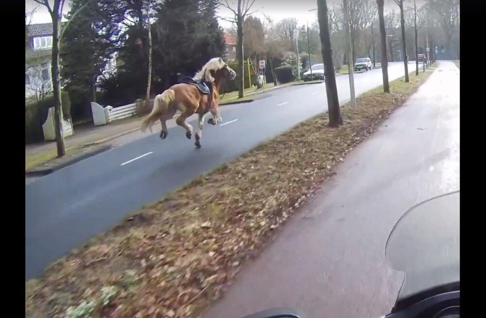 Jahmatav VIDEO | Vaata, miks on ülioluline hobust tee ääres märgates autol hoog maha võtta
