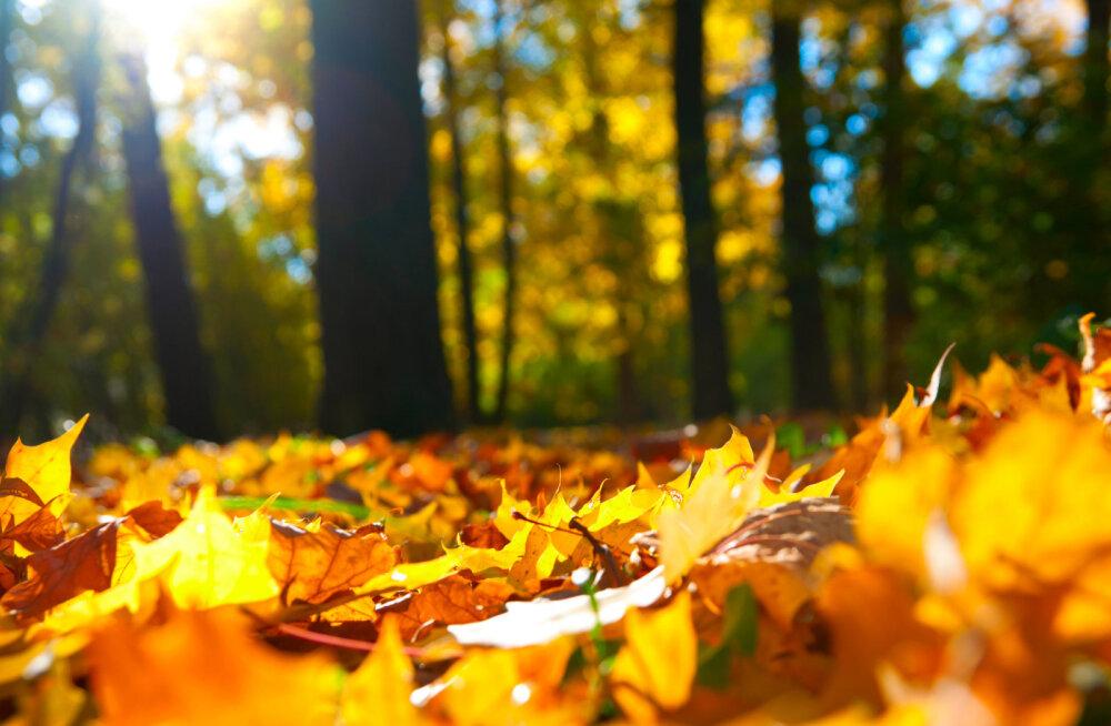 Nädala energiad 17.-23. septembril: liigume vastu sügisesele pööripäevale