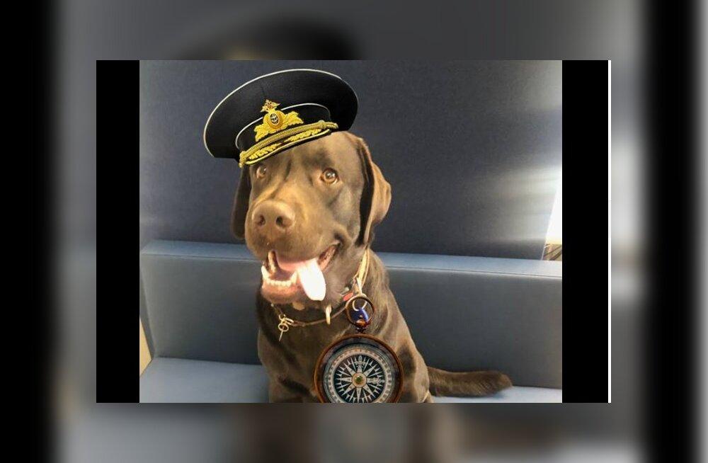 Tähelepanu: Eesti Mereakadeemia ootab nüüd õppima ka koeri, võimalus on saada lausa kapteniks