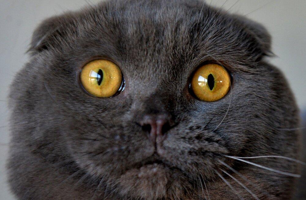 Kui rikas on maailma rikkaim kass?
