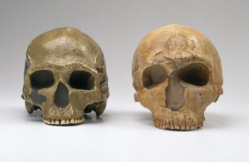 Arheoloogia kinnitab: sa oled üks vana sohilaps!