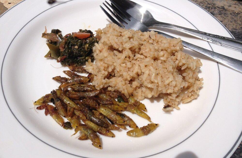 Kergelt röstitud Ida-Aafrika ritsikas risoto ja rohelise salatiga.