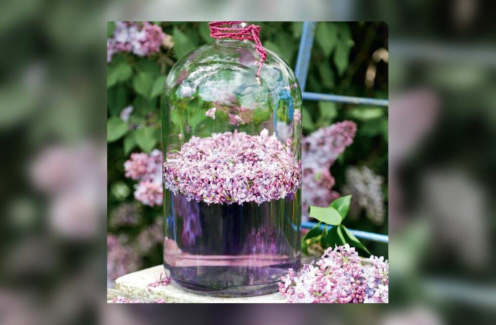 RETSEPT   Aromaatne sirelitest kevadliköör kohvilauale