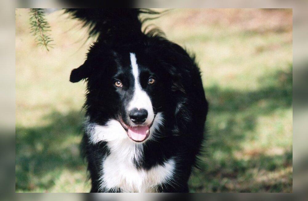 Hill's Pet Nutritioni lugu — ajalugu ja traditsioonid koeratoidu valmistamisel