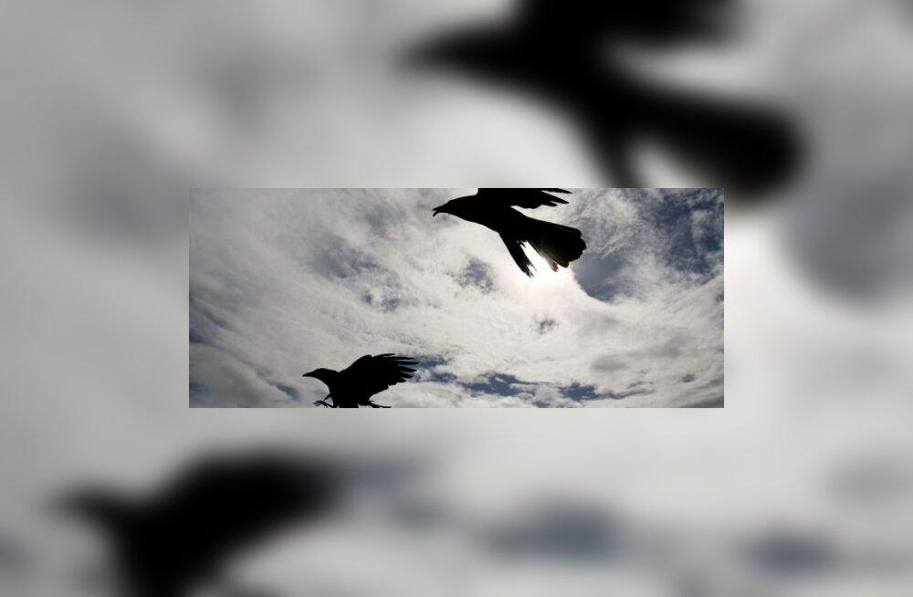 Орнитологи нашли гнездо редкой птицы