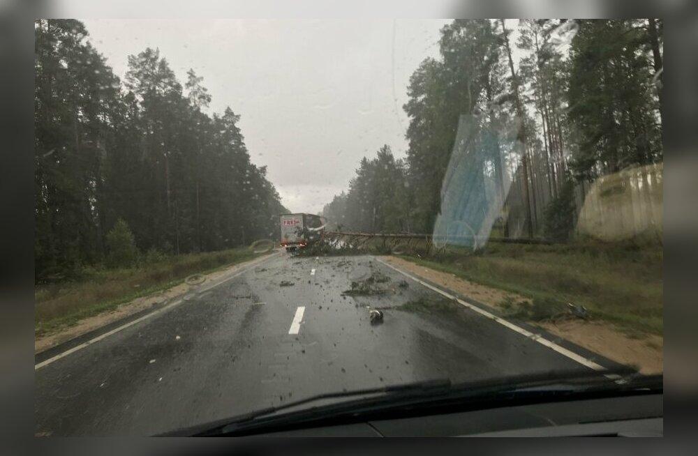 Шторм надвигается: на лобовое стекло рейсового автобуса, следовавшего из Риги в Таллинн, упало дерево