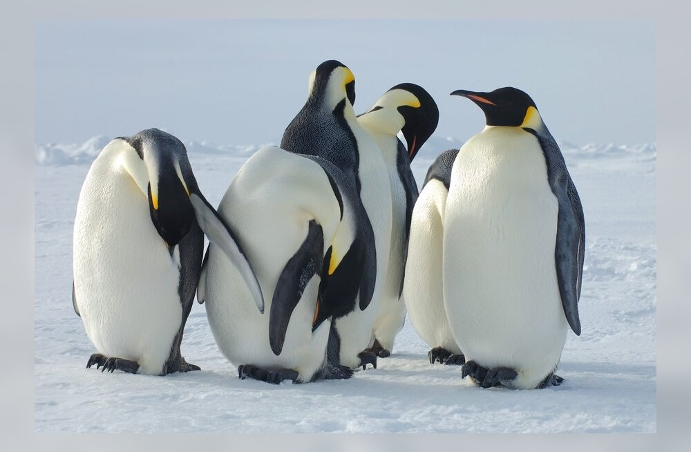 Hiina, Venemaa ja Ukraina panid veto Antarktika kaitsmisele