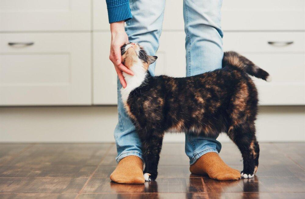 Miks kass mind ignoreerib? Teadlased uurivad kasside suhtlemisoskust