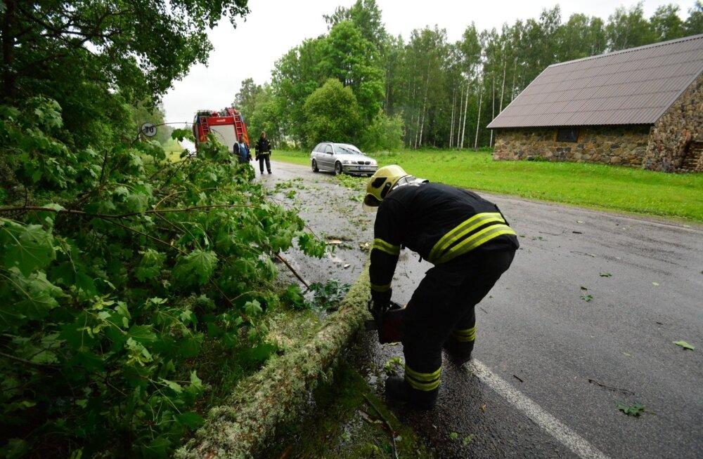 Viljandimaal Suure-Jaani vallas kukkus tugeva tuule tõttu puu teele.