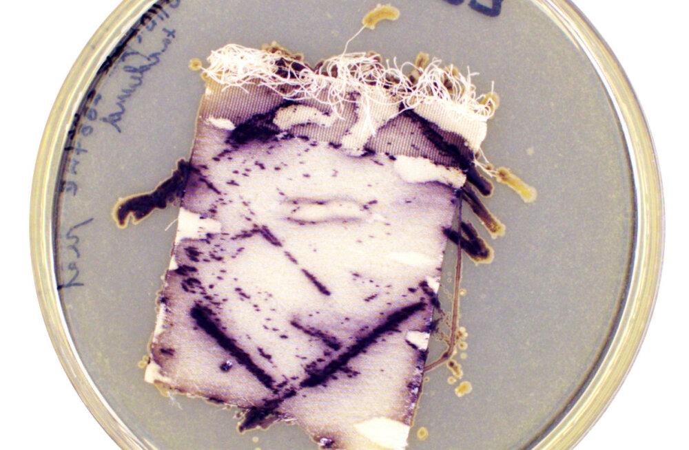 Kas bakterid suudavad päästa (moe)maailma?