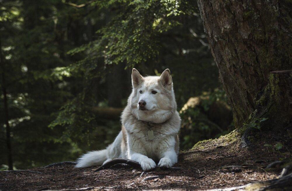 Haruldane sõprusside: kodust põgenema kippuval koeral oli metsas salasuhe