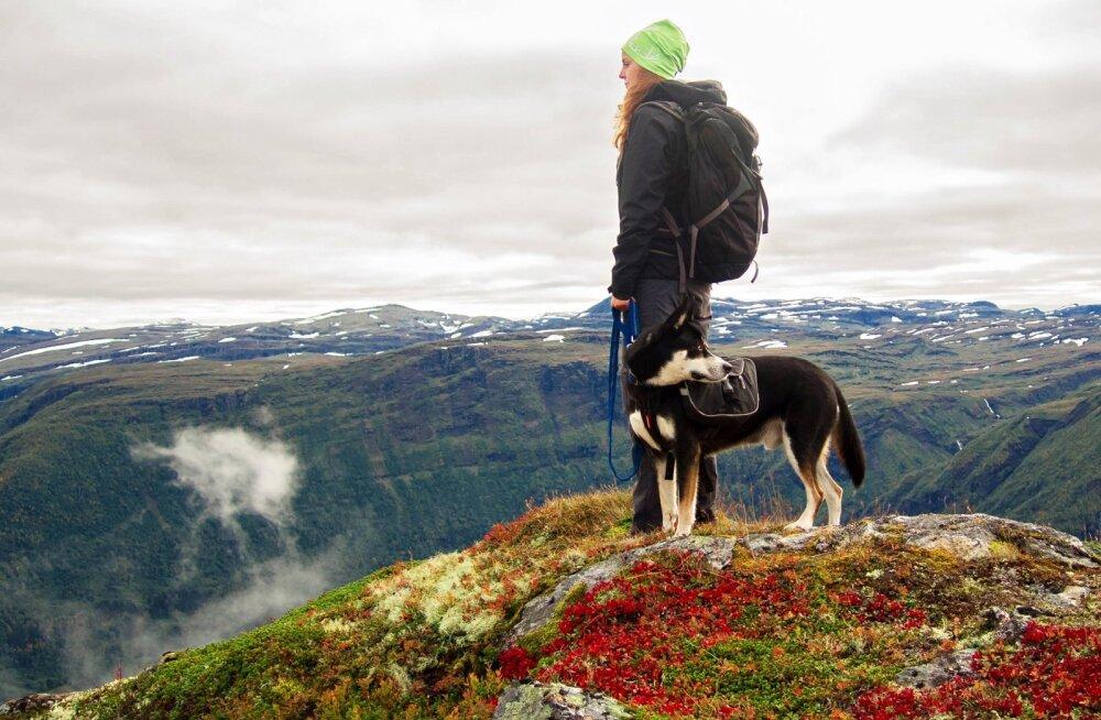 NIPID | Kuidas koeraga matkamiseks valmistuda ja mida kaasa võtta?